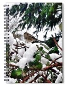 Snow Scene Of Little Bird Perched Spiral Notebook