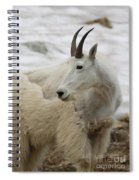 Snow White Mountain Goat Spiral Notebook