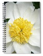 Snow White Peony Spiral Notebook