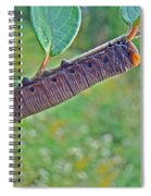 Snowberry Clearwing Hawk Moth Caterpillar - Hemaris Diffinis Spiral Notebook