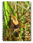 Snowberry Clearwing Spiral Notebook