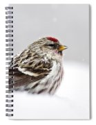 Snowy Common Redpoll Spiral Notebook