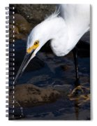 Snowy Egret Dribble Spiral Notebook