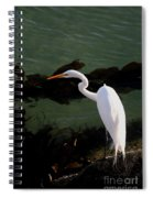 Great Egret Monterey Bay California  By Pat Hathaway Spiral Notebook