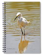 Snowy Egret Looking For Fish Spiral Notebook