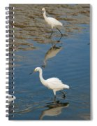 Snowy Egret Lunch Break Spiral Notebook
