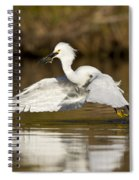 Snowy Egret With Lunch Spiral Notebook
