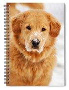 Snowy Golden Retriever Spiral Notebook
