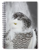 Snowy Owl 2 Spiral Notebook