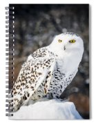 Snowy Owl Cold Stare Spiral Notebook
