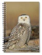 Snowy Owl Female Spiral Notebook