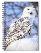 Snowy Owl Look Out Spiral Notebook