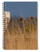 Snowy Owl Morning Spiral Notebook