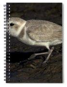 Snowy Plover Spiral Notebook