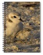 Snowy Plover Transforms Into A Spiderbird 4 Spiral Notebook
