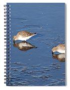 Snowy Plovers Spiral Notebook