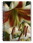 Snowy Wet Sienna Spiral Notebook
