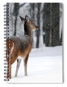 Snowy White Tail Spiral Notebook