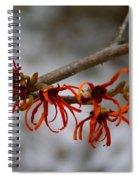 Snowy Witch Hazel Spiral Notebook