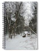 Snowy Wooded Path Spiral Notebook