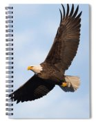 Soaring American Bald Eagle Spiral Notebook