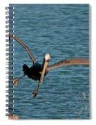 Soaring Pelican Spiral Notebook