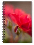 Soaring Red Rosebud Spiral Notebook