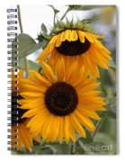 Soft Colors Sunflowers Spiral Notebook