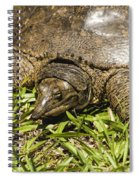 Florida Soft Shelled Turtle - Apalone Ferox Spiral Notebook
