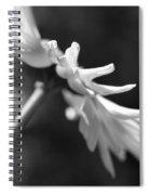Soft Focus Daisy Flower Monochrome Spiral Notebook