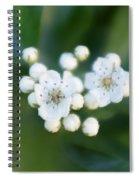Soft Hawthorn Spiral Notebook