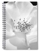 Soft Petal Rose In Black And White Spiral Notebook