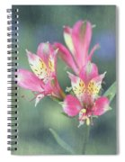 Soft Pink Alstroemeria Flower Spiral Notebook