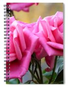 Soft Pink Roses Spiral Notebook