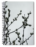 Soft Pussy Willows - Hard Gray Sky Spiral Notebook