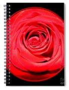Soft Red Rose Closeup Spiral Notebook