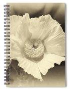 Soft Sepia White Poppy Matilija Flower Spiral Notebook