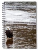 Solitary Eagle Spiral Notebook