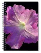 Solitary Pink Petunia Spiral Notebook