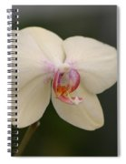 Solo Act Spiral Notebook