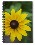 Solo Black-eye Susan Spiral Notebook