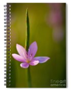 Solo Crocus Spiral Notebook