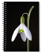 Solo Perfection Spiral Notebook