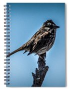 Song Sparrow On Top Of Branch Spiral Notebook