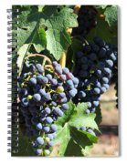 Sonoma Vineyards In The Sonoma California Wine Country 5d24630 Square Spiral Notebook