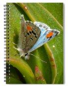 Sonoran Blue Spiral Notebook
