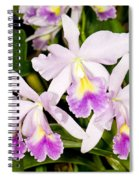 Sophronitis Orchid Spiral Notebook