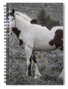 South Steens Wild Stallion Spiral Notebook