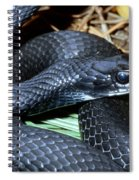 Southern Black Racer Coluber Priapus Spiral Notebook