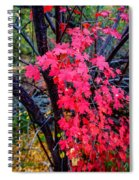 Southern Fall Spiral Notebook